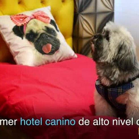 Un hotel canino donde no se pasa una vida de perros