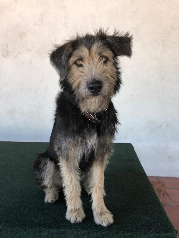 Monte fue rescatado mientras vagaba por las calles en Las Cruces, en el estado de Nuevo México. (EFE)