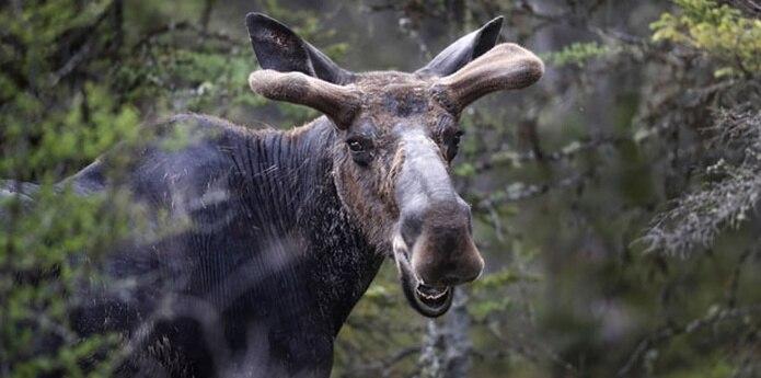 El animal sorprendió a Behr mientras caminaba entre las cabañas, indicaron funcionarios del parque.  (AP)