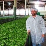 Mira cómo un boricua produce té en Ecuador